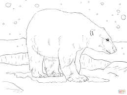 Small Picture Adult Polar Bear coloring page Free Printable Coloring Pages