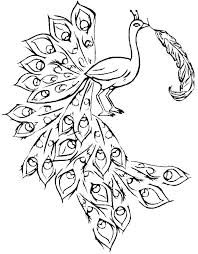 Peacock Coloring Pages For Adults Peacock Coloring Pages Peacock