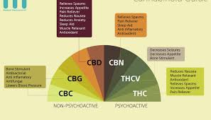 what is cbd and cbn in cannabis