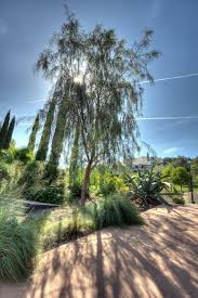 The 25 Best Small Ornamental Trees Ideas On Pinterest Good Trees For Backyard
