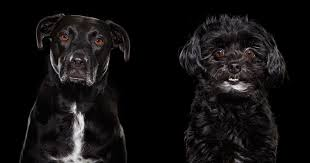 Portraits Of The Overlooked Black Dogs At Animal Shelters