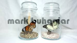 decorative glass jars with lids for india australia decorative glass jars with lids australia