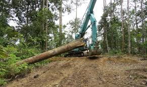 Reduced Impact Logging Itto The International Tropical Timber