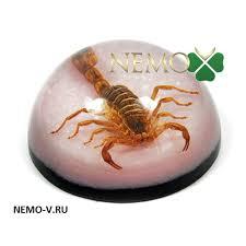 Персональный сайт Насекомые коллекция насекомых скорпион насекомые в акриле скорпион магнит со скорпионом настольный