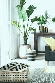 Schlafzimmer Pflanzen Welche Pflanzen Fürs Schlafzimmer Unique