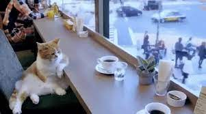 Top 30 Coffee Cat GIFs   Find the best GIF on Gfycat