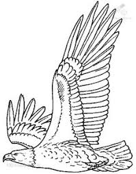 Small Picture Bald Eagle Coloring Project Free Coloring Pages For Kids