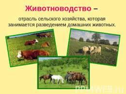 Животноводство класс презентация для начальной школы слайда 4 Животноводство отрасль сельского хозяйства которая занимается разведением дом
