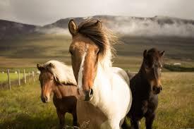 animals wallpaper. Modren Wallpaper Three Assortedcolor Horses Running Away From A Mountain To Animals Wallpaper L