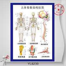 Human Skeleton Wall Chart Buy Paintings Flipchart Spine Bone And Joint Model Human
