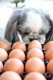 犬 ゆで 卵