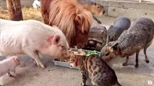 farm animals together. Brilliant Animals Garrett Watts On Twitter  Throughout Farm Animals Together