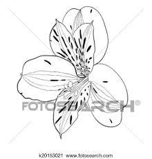 美しい モノクローム 黒いそして白い Alstroemeria 花 Isolated クリップアート切り張りイラスト絵画