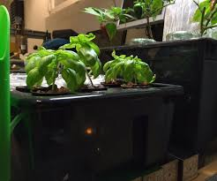 Hydroponics Herb Garden Kitchen Hydroponics Search Results