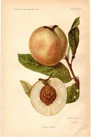 87 best images about Peaches for my Peach on Pinterest