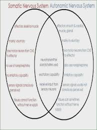 Central Nervous System Vs Peripheral Nervous System Venn Diagram Nervous System Worksheet Winonarasheed Com