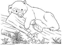 Disegno Da Colorare Orso Cat 5982 Images