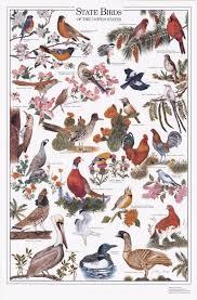 State Birds Of The U S Identification Chart Bird