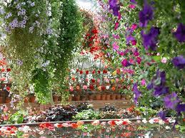 """Résultat de recherche d'images pour """"flowers paradise"""""""