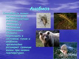 Презентация на тему РЕФЕРАТ ПО ФИЗИКЕ Термодинамика  9 Анабиоз Способность живых организмов