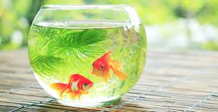 Small Fish Bowl Decorations Top 60 Hypoallergenic Pets UTopTens 55