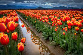 Most Beautiful Spring Wallpapers Free ...