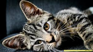 1080 Cat Backgrounds (Page 1) - Line ...