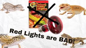 Bearded Dragon Night Light Red Lights Are Bad