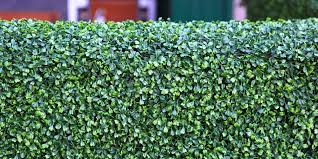brighten up your place with an instant hedge