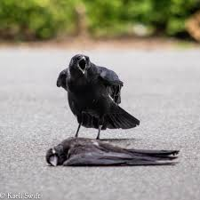 Crow Vending Machine Plans Unique Being A Scientist