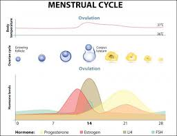 Typical Menstrual Cycle Chart How Long After Your Period Can You Get Pregnant Lovetoknow