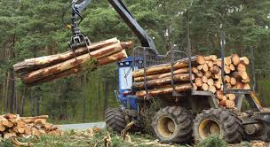 Logging Forestry Job Site Accidents And Injuries