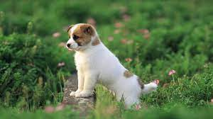 Cute puppy wallpaper 388822 [1920x1080 ...