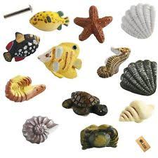 Seashell Knobs | eBay