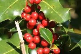 Imagini pentru Fructele de padure rosii