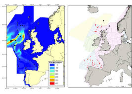 Abundance And Distribution Of Cetaceans Other Than Coastal