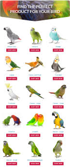Cockatiel Chart Cockatiel Diet Chart Lean High Protein Foods List