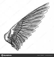 крыло на руке эскиз рука нарисованные крыло эскиз векторное