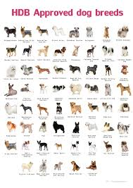 Types Of Pets Allowed In Hdb Dog Breeds List Dog Breeds