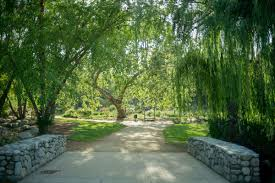 a photo of a bridge and weeping willow type tree inside descanso gardens