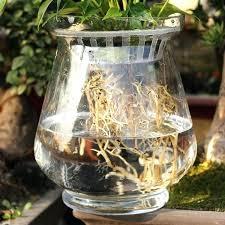 big glass vases hydroponic glass vase clear glass pots large pots of hyacinth vases large vase big glass vases extra large clear