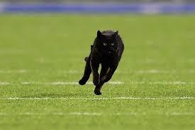 Cat On Monday Night Football At Metlife Stadium An Animal