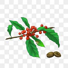 Cartoon coffee tree seconds picture material. Coffee Tree Png Images Vector And Psd Files Free Download On Pngtree