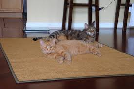 two cats laying on sisal rug pet friendly sisal rugs