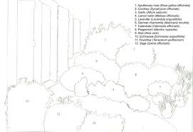 Small Picture Herb Garden Design Plans Essential Plants for a 21st Century