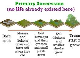 Primary Succession And Secondary Succession Venn Diagram Asaad Mumtaz P 3 Screen 9 On Flowvella Presentation