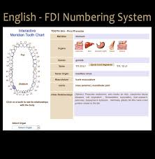 English Tooth Chart Fdi Numbering System Interactive