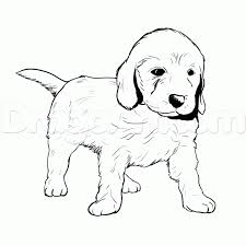 Small Picture Golden retriever puppy drawing Dog life photo