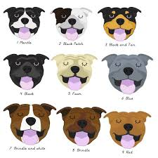Staffy Colours Chart Staffie Colouring Staffy Dog Dog Collar Tags Terrier