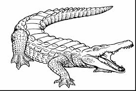 Small Picture surprising alligator coloring pages with alligator coloring page
